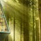 Architects that bring nature to your house