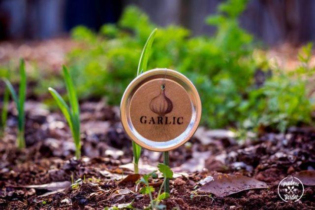 garden-markers-2-640x426